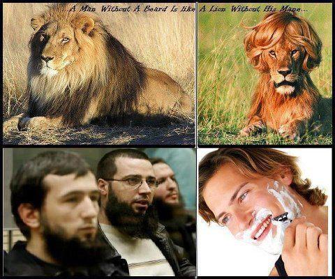 Vousy a lvi